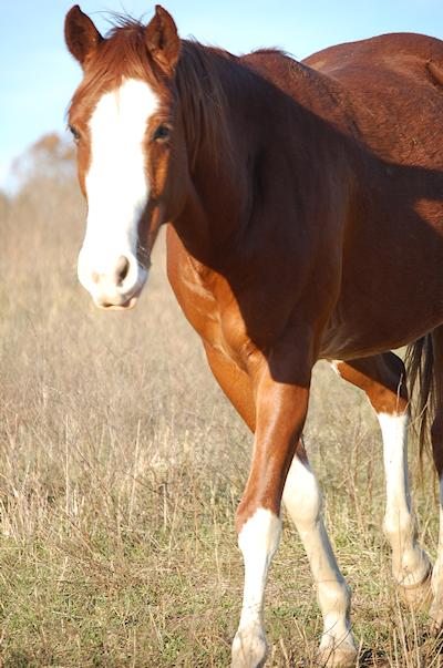 Saddle Up Horses 2