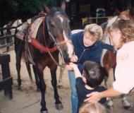 horses at saddle up